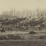 A photo of a Union artillery battery with its horses- Civil War Medicine Museum