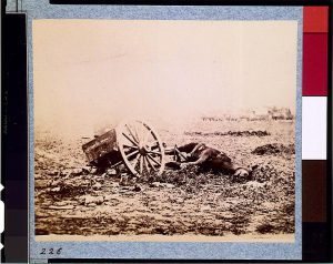 One of the 1.2 million dead horses of the Civil War (Courtesy of the Library