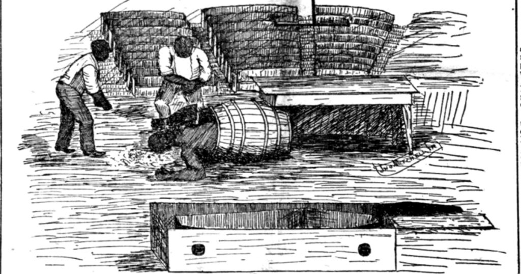 A body for dissection being taken out of a whiskey barrel.