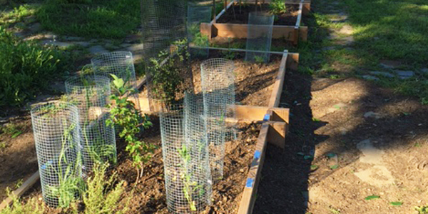 Western red cedar raised beds with the newly planted herbs.
