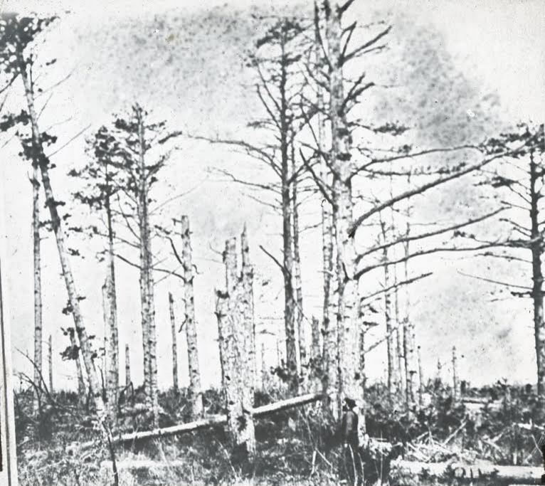 The Wilderness battlefield. Image used in Bicknell's stereopticon presentation. From the collection of the Fifth Maine Regiment Museum